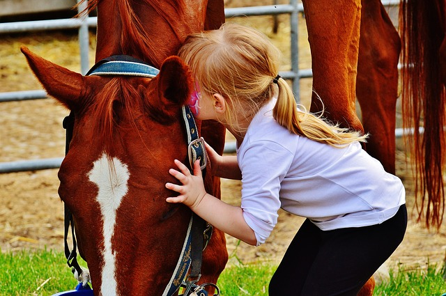 Equine-human interaction