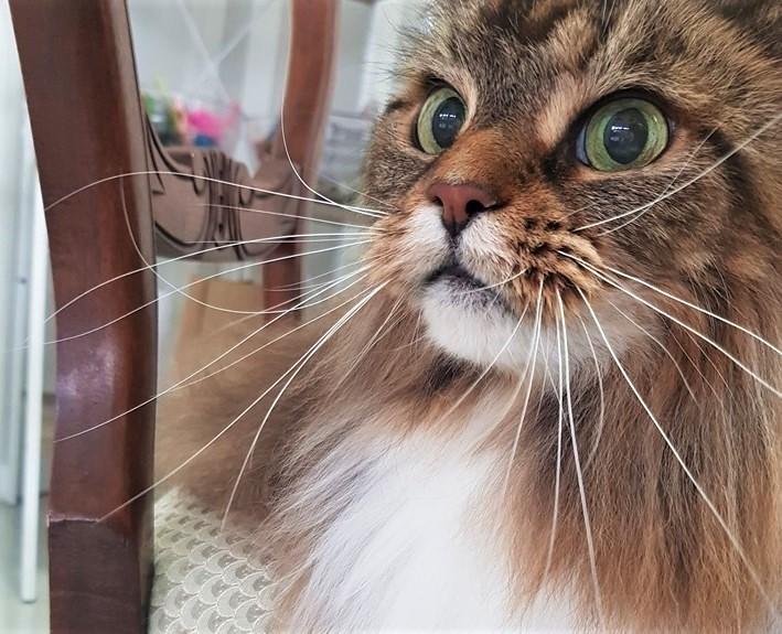 Aristocats Feline Day Spa cat spa